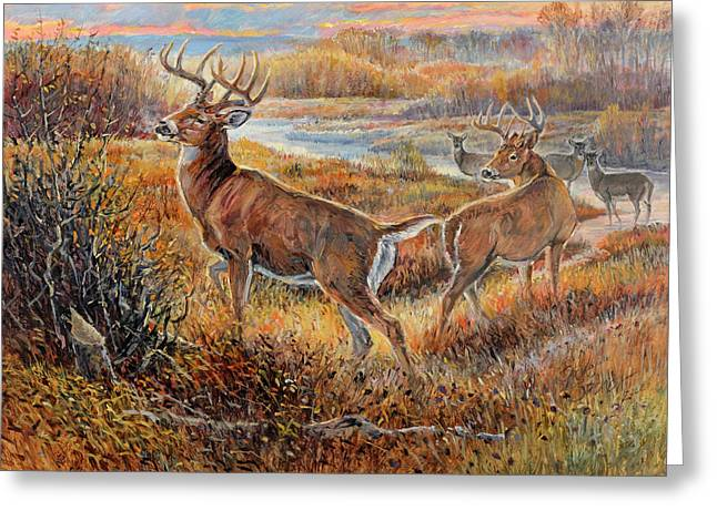 Whitetail Sunrise Greeting Card by Steve Spencer