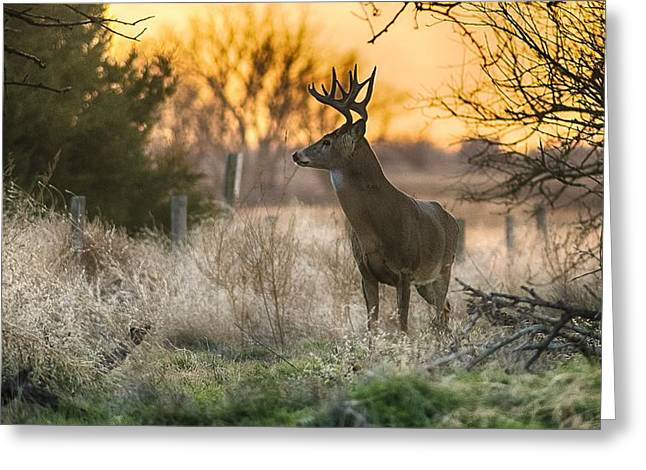 Sunset Framed Prints Greeting Cards - Whitetail Sunset Greeting Card by Garett Gabriel