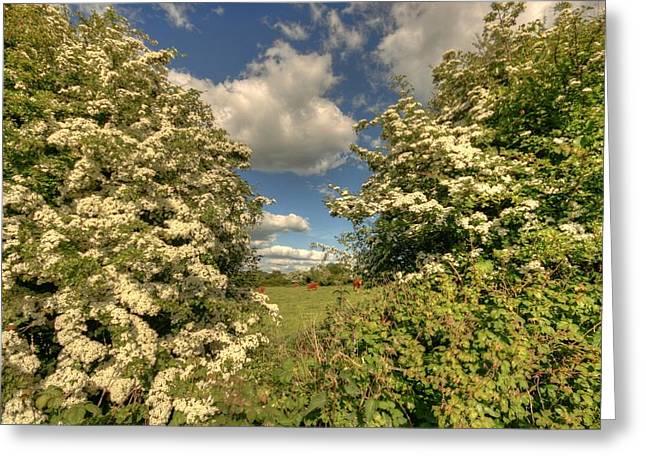 Irish Farm Greeting Cards - Whitethorn Hedge Greeting Card by John Quinn
