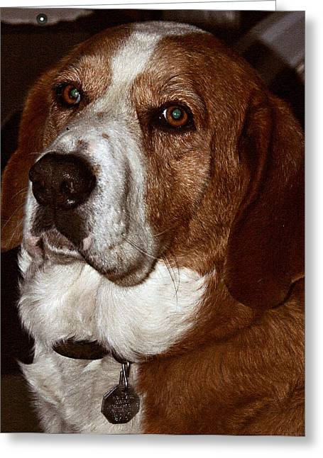 Basset Hound Framed Prints Greeting Cards - Who Could Ask For More Greeting Card by Don Wright