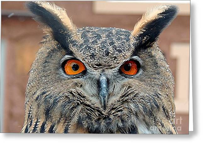Owl Eyes Greeting Cards - Who Greeting Card by Diane  Greco-Lesser