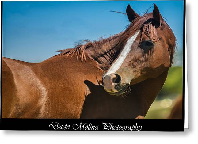"""animal Photographs"" Greeting Cards - Who Me? Greeting Card by Dado Molina"