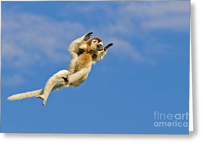 Thought Wild Greeting Cards - Who Needs Wings? Greeting Card by Ashley Vincent