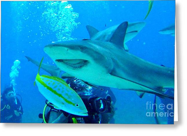 Who Said Sharks Were Mean Greeting Card by John Malone