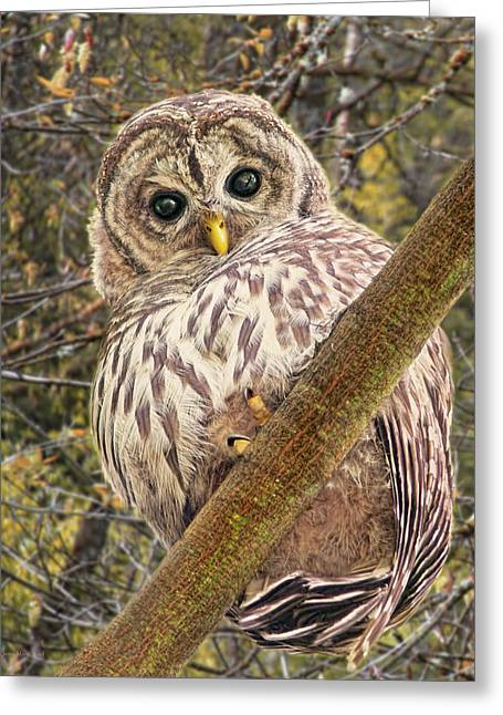 Who Who Are You Barred Owlet Greeting Card by Jennie Marie Schell