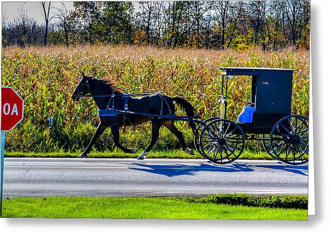 Horse And Buggy Greeting Cards - Whoa Greeting Card by Matt Shiffler