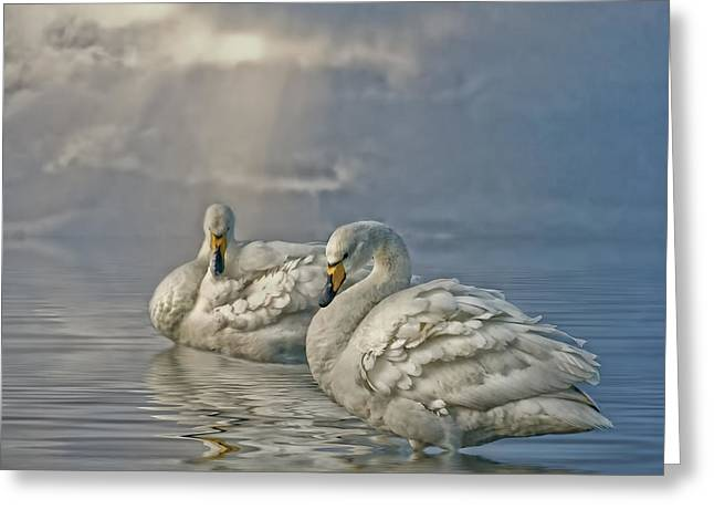 Pairs Greeting Cards - Whoopers Greeting Card by Brian Tarr