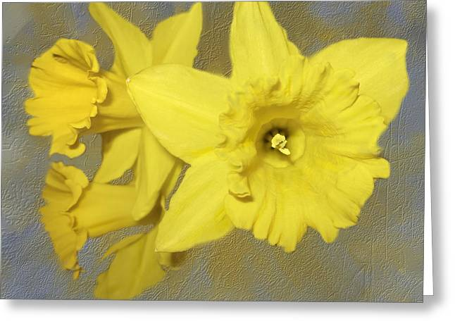 Spring Bulbs Greeting Cards - Whos Ready For Daffodils Greeting Card by Diane Schuster