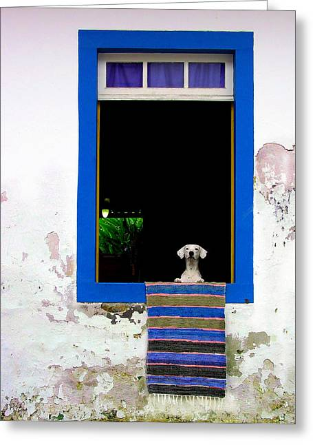 Dog In Window Greeting Cards - Whos There? Greeting Card by Matt Proehl