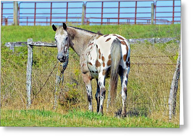 Pastureland Greeting Cards - Whos There Greeting Card by Susan Leggett