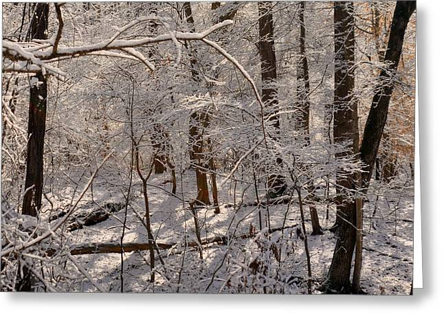 Snowy Day Greeting Cards - Whose Woods These Are? Greeting Card by Lydia Holly