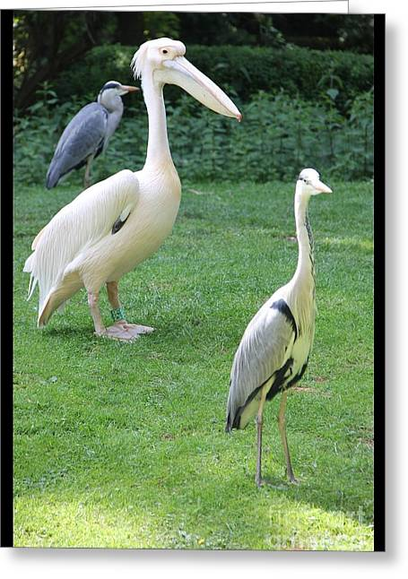 Enjoying Greeting Cards - Why am I so different... Greeting Card by Jackie Mestrom
