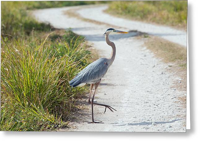 Merrit Greeting Cards - Why Did the Heron Cross the Road Greeting Card by John Bailey