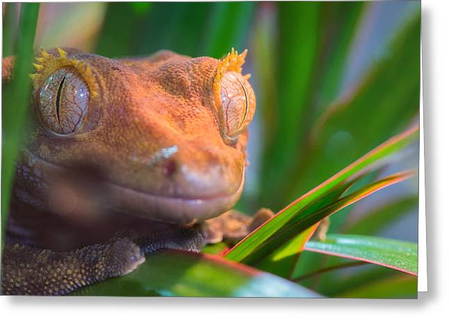 Gecko Print Greeting Cards - Why hello0 Greeting Card by Bruno Rosa