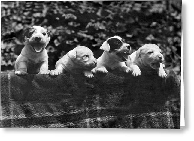 why I Love A Dog Prizes Greeting Card by Underwood Archives