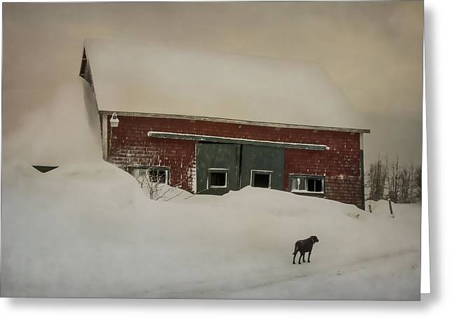 Old Maine Barns Greeting Cards - Why Some Barns Are Painted Red Greeting Card by Susan Capuano