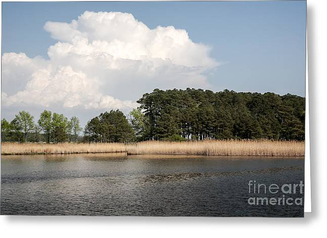 Tannic Acid Greeting Cards - Why they call it the Blackwater Wildlife Refuge Greeting Card by William Kuta