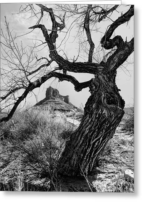 Gnarly Greeting Cards - Wicked Tree Greeting Card by Jeff R Clow