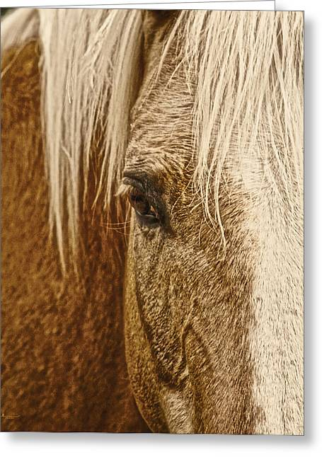 Western Greeting Cards - Wickenburgs Palomino Gold Greeting Card by Amanda Smith