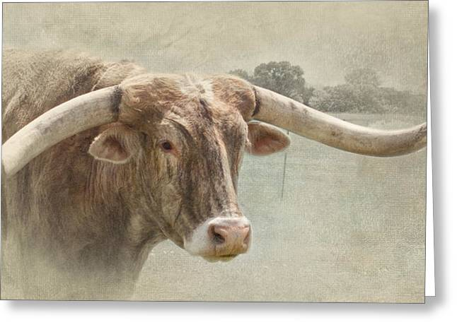 Steer Greeting Cards - Wide Greeting Card by David and Carol Kelly