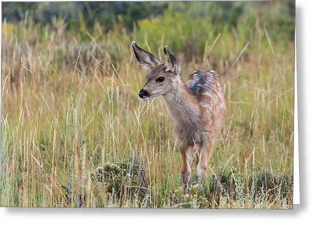 Southwest Wildlife Greeting Cards - Wide Eyed Innocence  Greeting Card by James Marvin Phelps