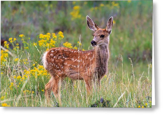 Southwest Wildlife Greeting Cards - Wide-Eyed Wonder   Greeting Card by James Marvin Phelps