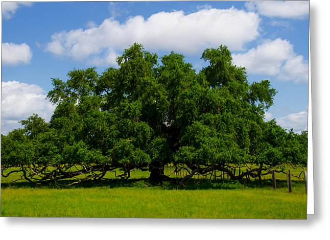 Overhang Digital Art Greeting Cards - Wide Oak Greeting Card by Jerry Hart