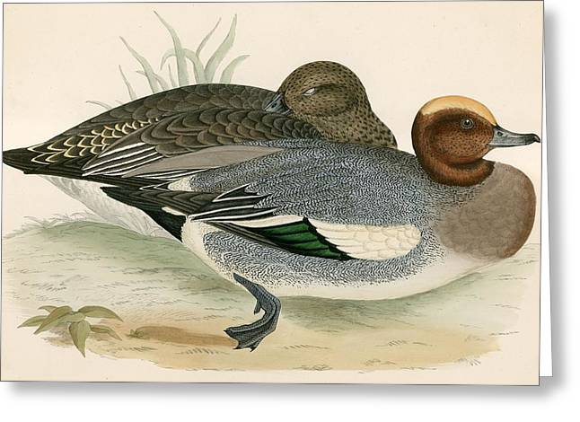 Hunting Bird Photographs Greeting Cards - Wigeon Greeting Card by Beverley R. Morris