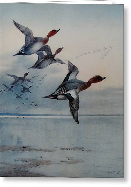 Beauty Greeting Cards - Wigeon over the Estuary Greeting Card by Celestial Images