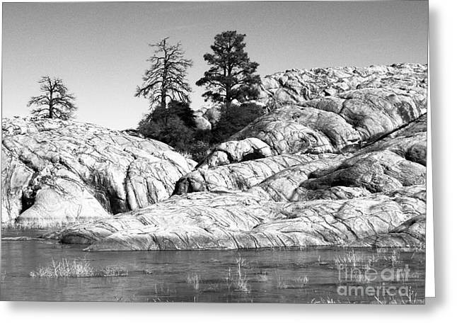 Willow Lake Greeting Cards - Willow Lake Number One BW Greeting Card by Heather Kirk