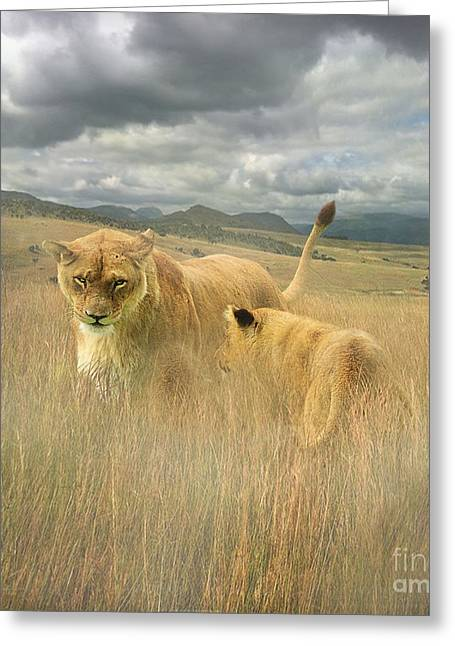 Lioness Greeting Cards - Wild Africa Greeting Card by Roy  McPeak