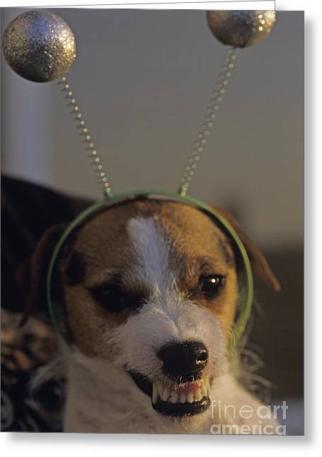 Growling Greeting Cards - Wild alien Dog Greeting Card by Jim Corwin