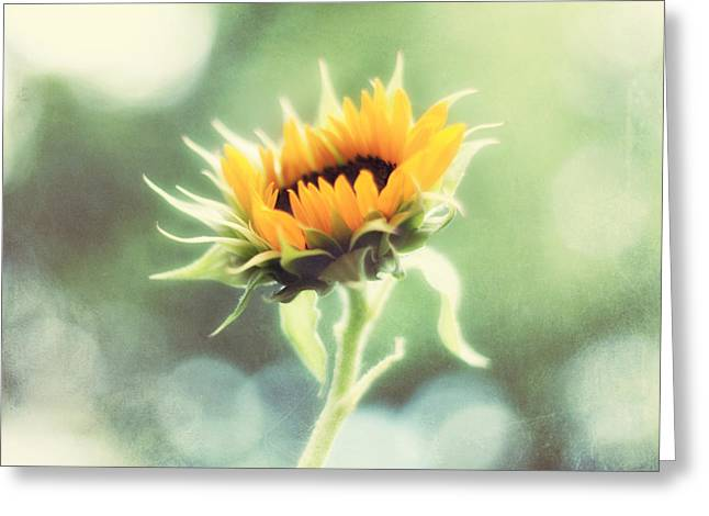 Yellow Sunflower Greeting Cards - Wild and Free Greeting Card by Amy Tyler