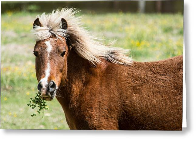 Brown Horse Photographs Greeting Cards - Wild and Free Greeting Card by Parker Cunningham