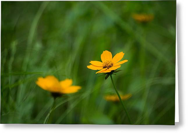 Wild Flowers Of Texas Greeting Cards - Wild and Free Greeting Card by Shelby  Young