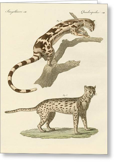 Leopard Drawings Greeting Cards - Wild animals Greeting Card by Splendid Art Prints