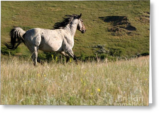 Wild Appaloosa Running away Greeting Card by Sabrina L Ryan