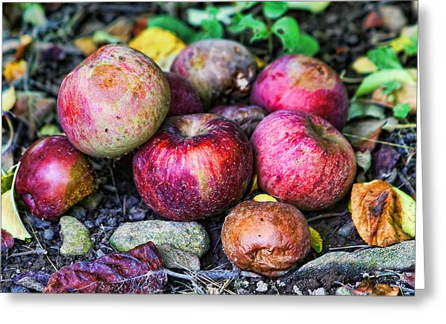 Wild Orchards Greeting Cards - Wild Apples Greeting Card by Lee Dos Santos