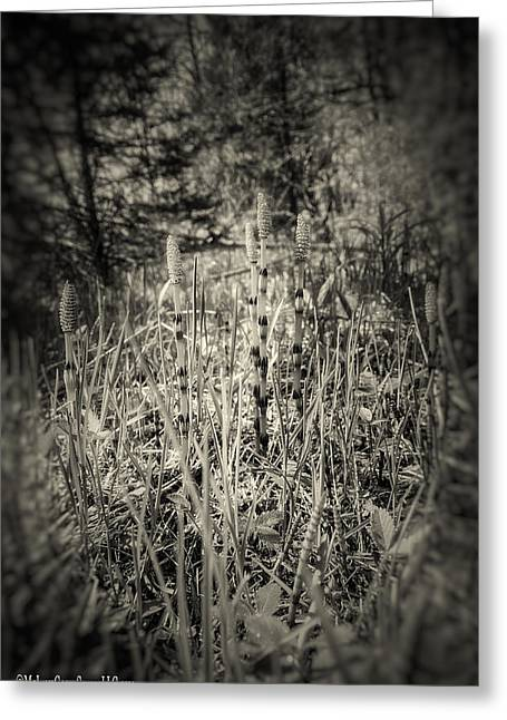 Wild Orchards Photographs Greeting Cards - Wild Asparagus Black and White Greeting Card by LeeAnn McLaneGoetz McLaneGoetzStudioLLCcom