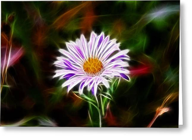 Aster Greeting Cards - Wild Aster Greeting Card by Shane Bechler