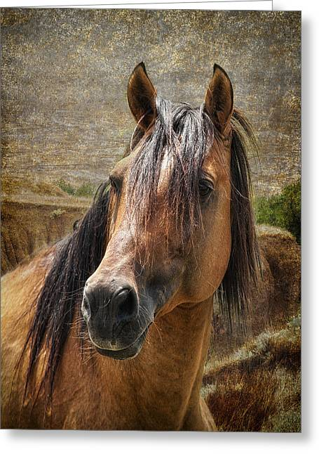 Wild Horses Greeting Cards - Wild at Heart Greeting Card by Ron  McGinnis