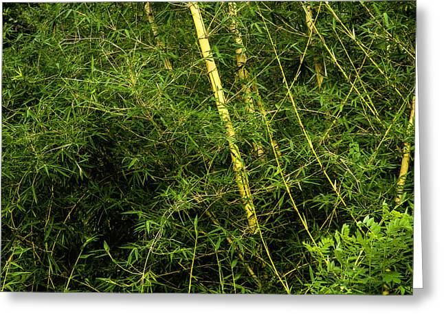 Close Focus Nature Scene Greeting Cards - Wild Bamboo Greeting Card by Regina Koch