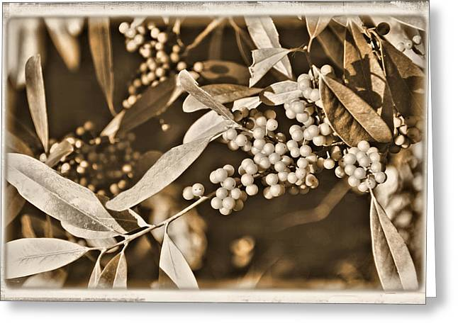 Barrie Greeting Cards - Wild Barries Greeting Card by Rosalie Scanlon