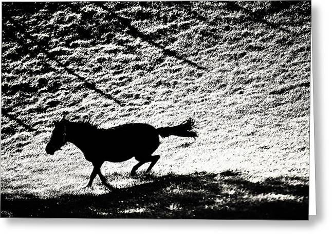 Beautiful Horse Photography Greeting Cards - Wild Beauty. Black and White Greeting Card by Jenny Rainbow