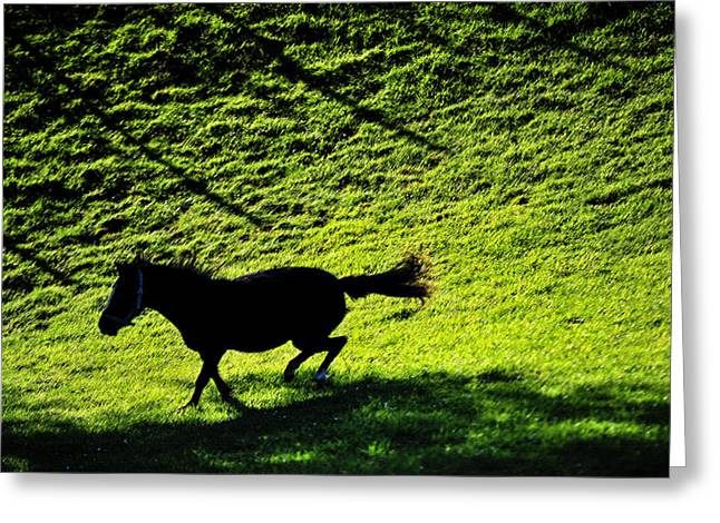 Beautiful Horse Photography Greeting Cards - Wild Beauty. Color Greeting Card by Jenny Rainbow