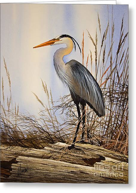 Shore Bird Print Greeting Cards - Wild Beauty Greeting Card by James Williamson