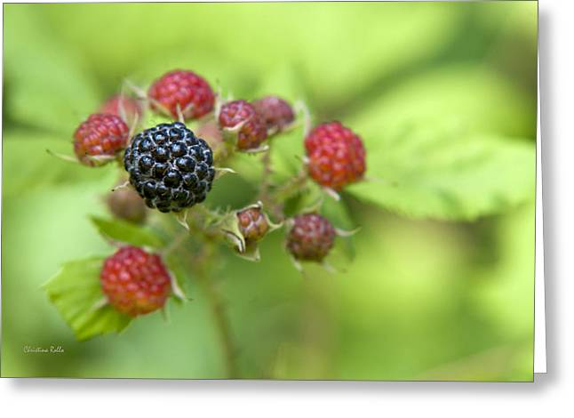 Black Berries Photographs Greeting Cards - Wild Berries Greeting Card by Christina Rollo