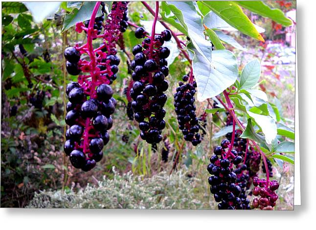 Berry Glass Art Greeting Cards - Wild Berry Greeting Card by  George Griffiths