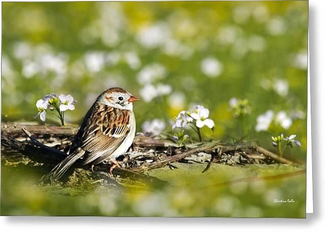 Wild Birds - Field Sparrow Greeting Card by Christina Rollo
