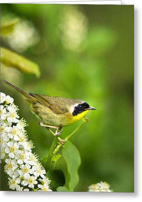 Warbler Greeting Cards - Wild Birds - Male Common Yellowthroat Warbler Greeting Card by Christina Rollo